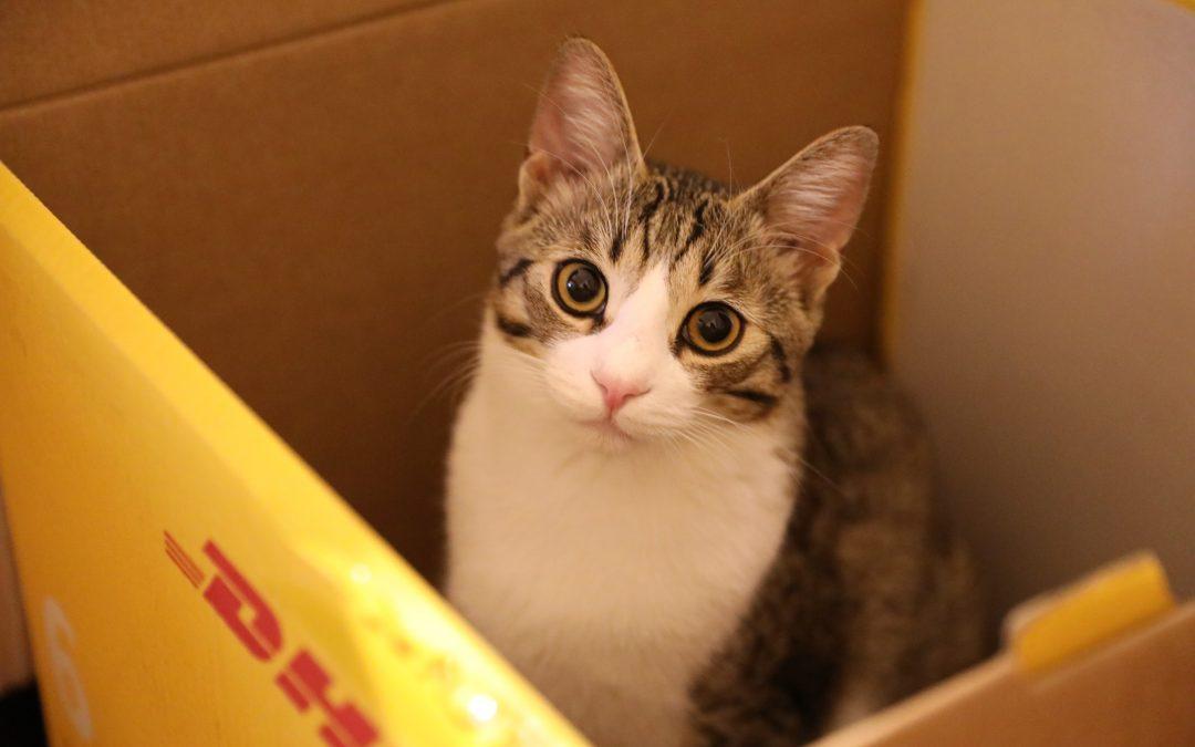De ce iubim pisicile!? Povestea lui Feny Iubirică Eparu, motanul absolut